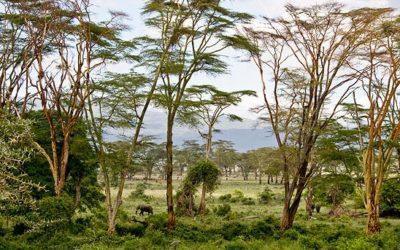 Forest Stewardship Council Certification benefits World Heritage sites