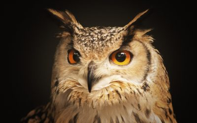 Is Keeping Owls as Pets a Good or Terrible Idea? (9 Doubts Solved)