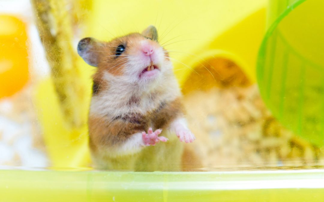DIY: Hamster Bin Cage (4 Steps Practical Guide)